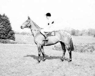 Arkle with Pat Taaffe (b478-03)